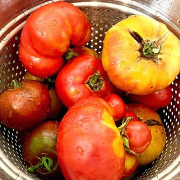 tomatoes for canning sauce in a silver colander